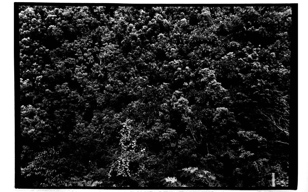 aforest-e1310271026290
